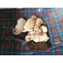 Filhotes De Chow Chow Disponíveis Para Reserva. Com Pedigree