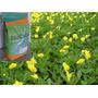 Embalagem De 500 Gr De Sementes De Grama Amendoim
