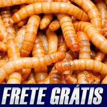 1300 Larvas Tenebrio Molitor - Frete Gratis + Cálcio Brinde
