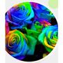 45 Sementes De Rosas Exóticas 9 Tipo De Rosa.( Frete Grátis)
