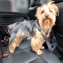 Cinto De Segurança Pet Para Cachorro - Frete Grátis