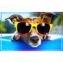 Poster Grande Hd Fashion Dog #6 Vintage Praia 60x96cm Cartaz