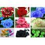 90 Sementes Rosas Exótica 9 Tipo,cores,frete Grátis Via Pac