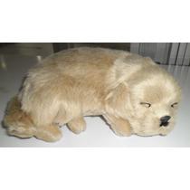 Cachorro Golden Retriver Corpo Pelúcia Mini Perfect Petzzz
