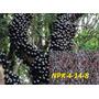 Adubo Npk 04-14-08 Ideal Para Floração E Frutificação 2 Kg