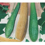 35 Sementes De Bucha Vegetal Frete Grátis - Top Seed