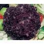 250 Sementes Peletizadas De Alface Red Star - Hidroponia