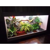 Terrário Iguana, Jibóia, Camaleão, Corn Snake, Teiú, Piton