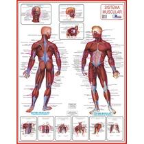 Mapa Os Músculos - Enfermagem Educação Física - Frete Grátis