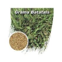 1 Kg De Sementes De Grama Batatais - Envio Imediato