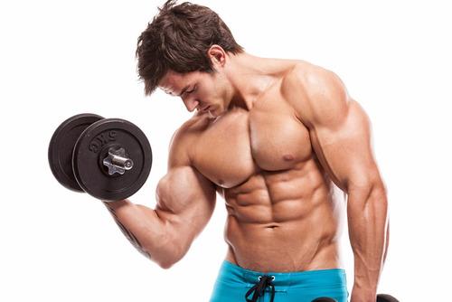 Guia Completo De Musculação Livro Digital