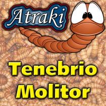 S0100 - Tenebrio Molitor - 100 Larvas Vivas