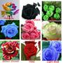 90 Sementes Rosas Exóticas Kit 1 - Frete Grátis + Brinde