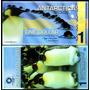 Antarctica 1 Dollar 2011 Fe Pinguim Imperador Políme * Q J *