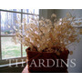 25 Sementes Flor Dólar De Prata Lunaria Annua P/mudas