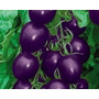 Sementes De Tomate Cereja Purple