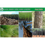 Mudas Pinus Taeda Excelentes Para Reflorestamento