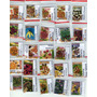 Kit Sementes De Pimentas 25 Variedades-com Haban. Chocolate
