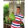 Graviola Morada Gigante- Deliciosa Fruta Tropical R$ 24,90