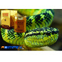 Creme Anti Rugas Veneno De Cobra Efeito Botox Importado100g