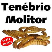 L300 - Tenébrio Molitor - 300 Larvas - Frete Grátis