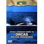 Dvd Orcas Baleias Assassinas Mitos E Verdades Animal Planet