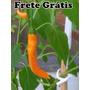 Pimenta Dedo-de-moça Amarela - 15 Sementes - Frete Grátis