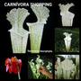 Sementes Planta Carnívora Sarracenia Leucophylla Gratis Subs