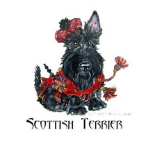 Cobertura - Namoro - Scottish Terrier Com Pedigree Excelente