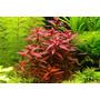 Planta Para Aquario(kits Contendo 20 Plantas)