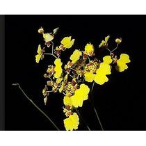 Orquidea Chuva De Ouro (oncidium) Artificial Haste