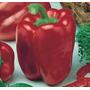 60 Sementes De Pimentão Quadrado Vermelho Frete Grátis