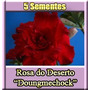 Rosa Do Deserto Doungmechock Adenium Sementes Flor Pra Mudas