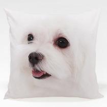 Almofada Cachorro Maltês