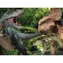 Kit Festa Provençal Dinossauros Arte Cartões Convites
