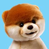 Boo---World_s-Cutest-Dog_-Linda-Pelucia-Do-Cachorro-Boo-22cm