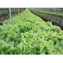 Fertilizante Horta Nutrientes 100% Completo Hidroponia 1000l
