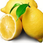 Muda De Limão Siciliano Enxertado Para Alta Gastronomia