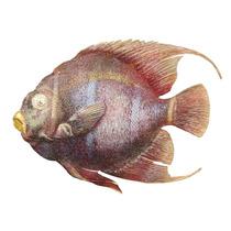Peixe De Metal Para Pendurar Na Parede