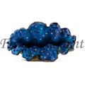 Enfeite De Resina Soma Coral Tridacna Azul Fish Ornament