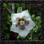 Sino Asiático Codonopsis - Sementes Flor Para Mudas