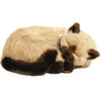 Filhote Gato Siames Caramelo Que Respira Perfect Petzzz