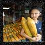 Mamão Formosa Gigante Max - Sementes Frutas Para Mudas