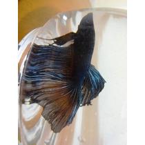 Kit Festa,peixe Beta Peixe Vinil Nemo P 5935598 Ctf Ibama