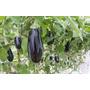 Sistema De Irrigação Automática Para Hortas E Jardins Pomar