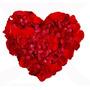 1.000 Pétalas De Rosas Artificiais Vermelhas - Chuvas Noivas