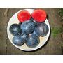 Muda Fruta Ameixa Da Australia Davidsonia Pruriens Rara