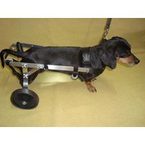 Cadeira De Rodas Animal