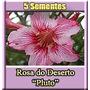 Rosa Do Deserto Pluto Adenium Sementes Flor Pra Mudas