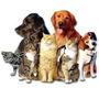 Como Montar Petshop Apostila Sebrae Como Fazer Pet Shop